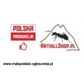Anthillshop.pl - mrówki, terraria i formikaria